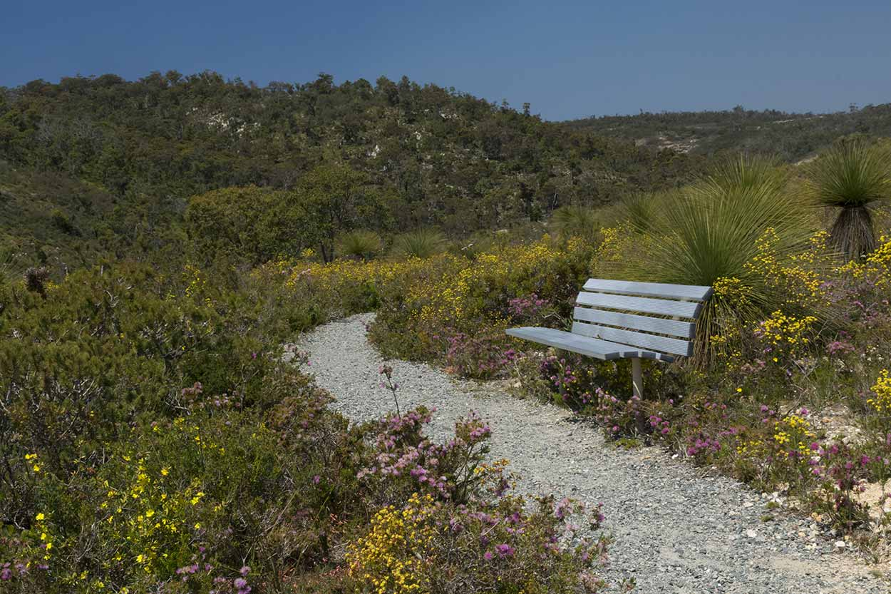 A seat in the wildflowers of the Eagle View Trail, Ellis Brook Valley Reserve, Perth, Western Australia