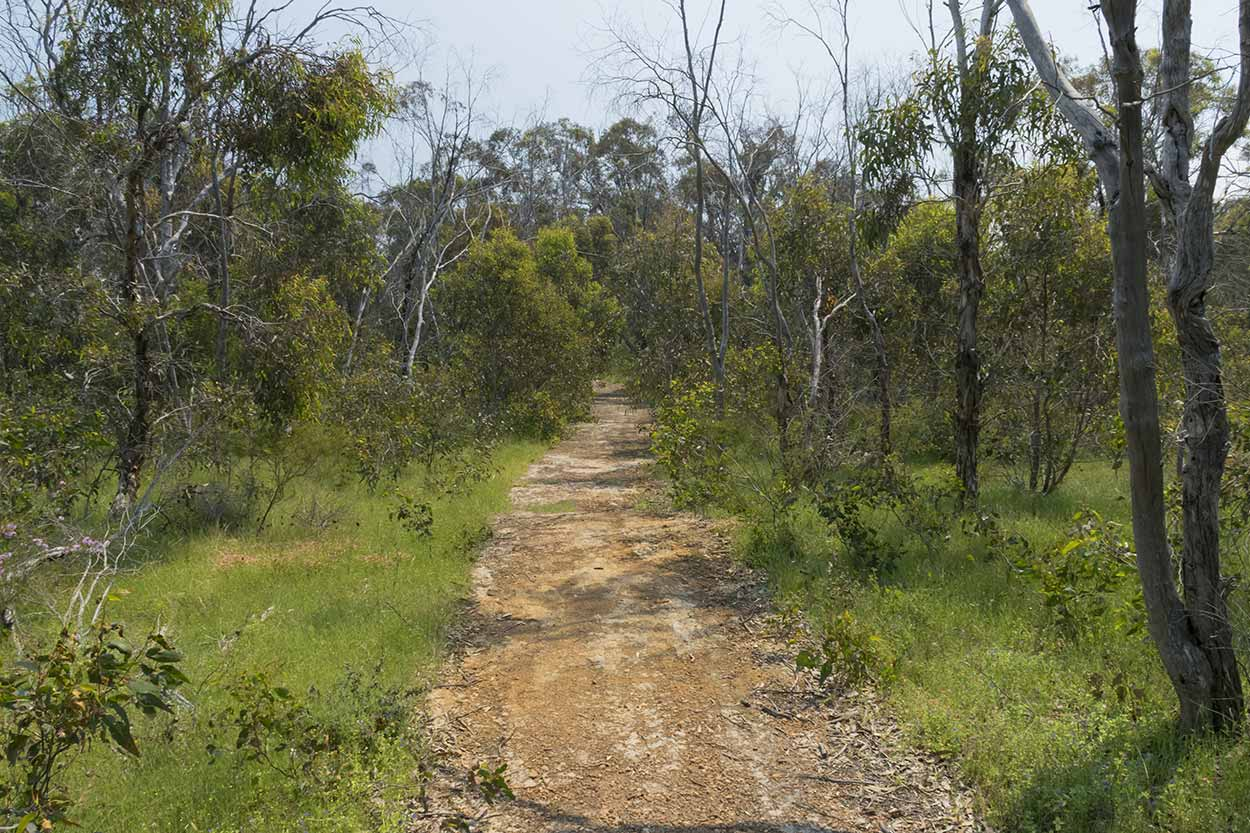 The Easy Walk Trail at Ellis Brook Valley Reserve, Ellis Brook Valley Reserve, Perth, Western Australia