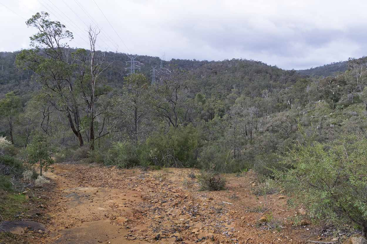 Bushland in Beelu National Park, Perth, Western Australia