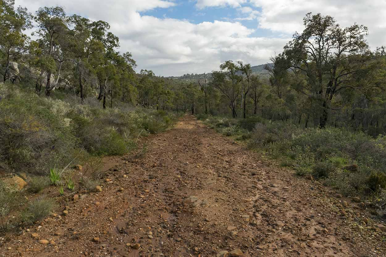 Trail of the Helena Pipehead Walk, Beelu National Park, Perth, Western Australia