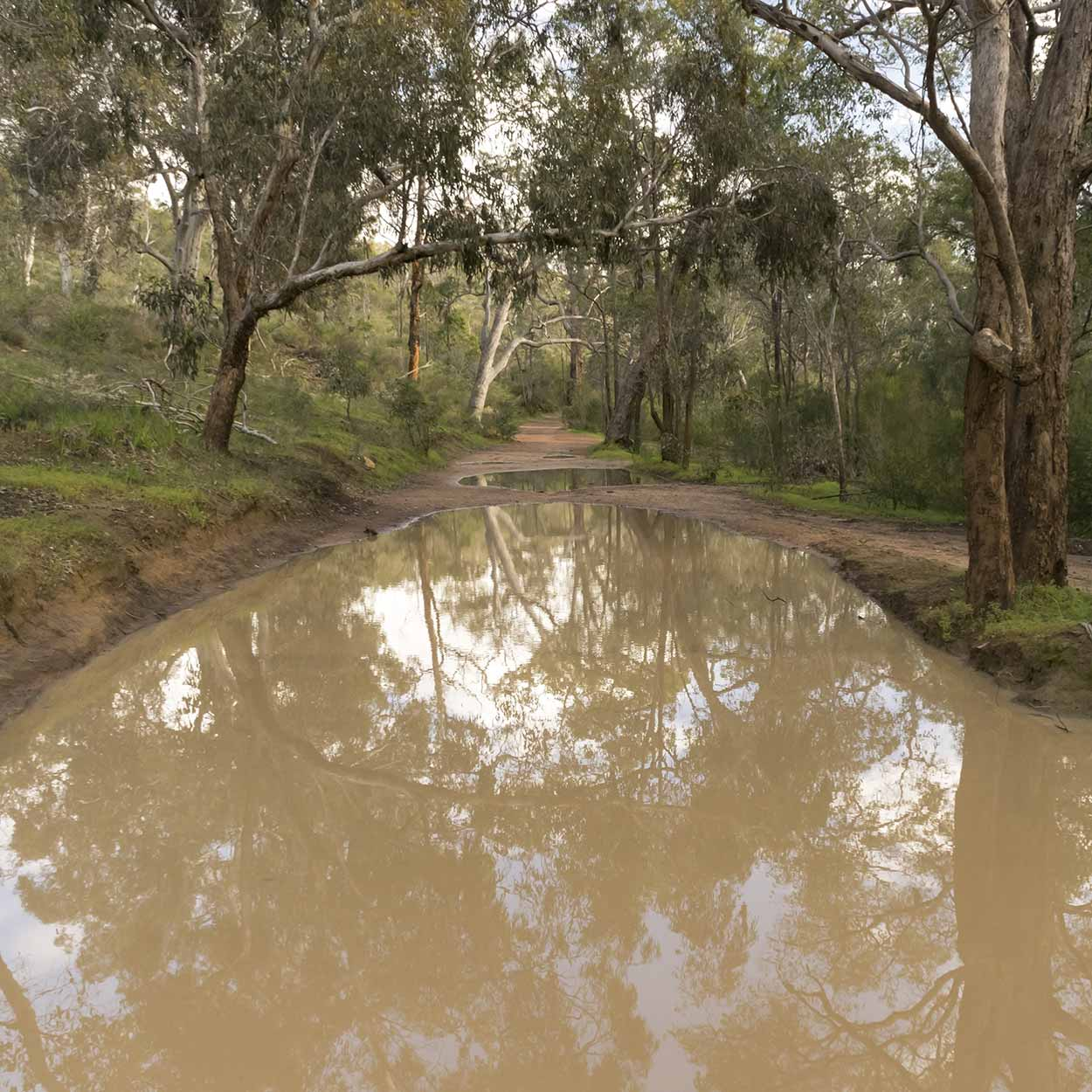 Large puddle on the Helena Pipehead Walk, Beelu National Park, Perth, Western Australia