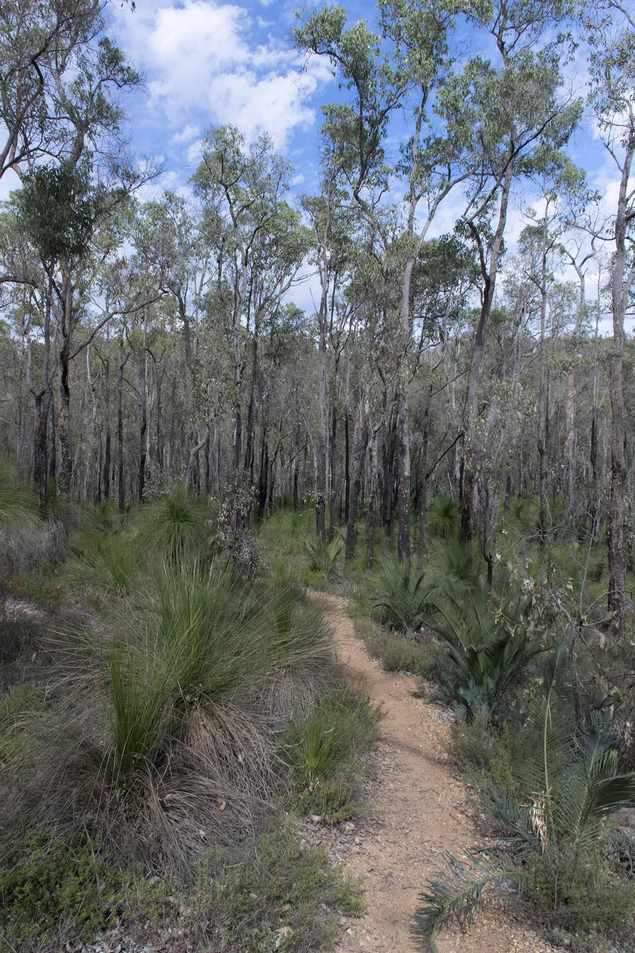 Bushland, Bibbulmun Track, Perth, Western Australia