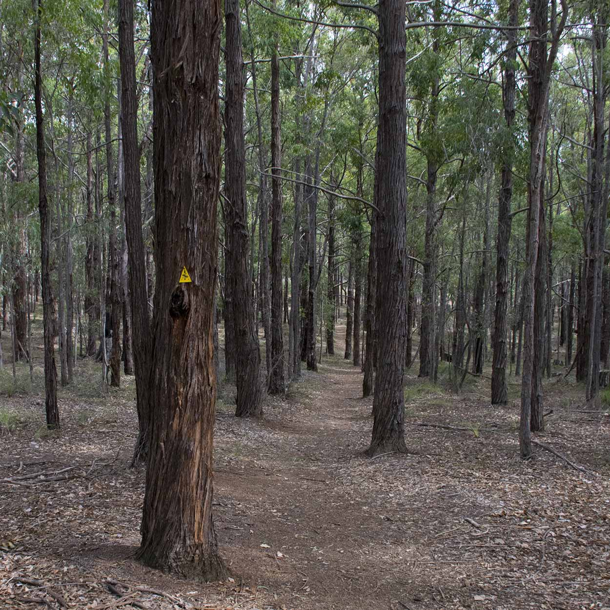 Hiking the Bibbulmun Track to Kalamunda, Perth, Western Australia