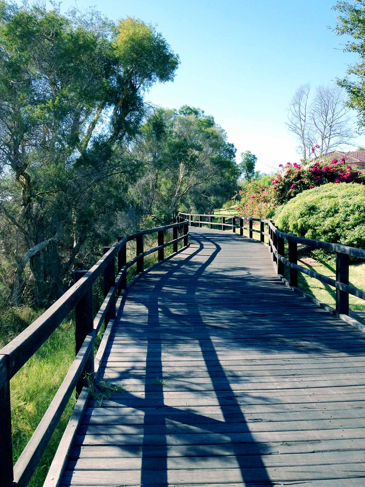 A boardwalk within the Canning River Regional Park near the Riverton Bridge, Canning River, Perth, Western Australia