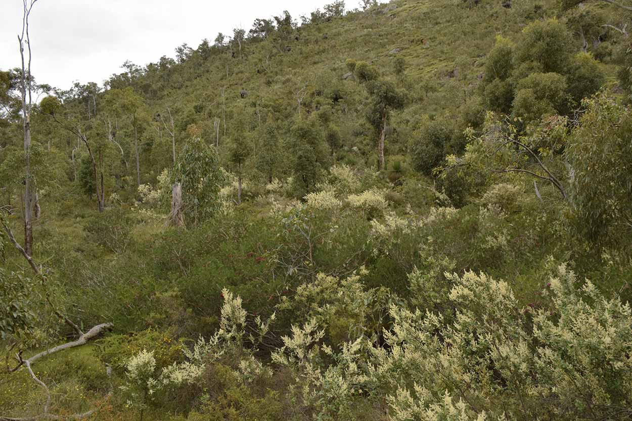 Walking along the Blue Wren Ramble Trail, Ellis Brook Valley Reserve, Perth, Western Australia