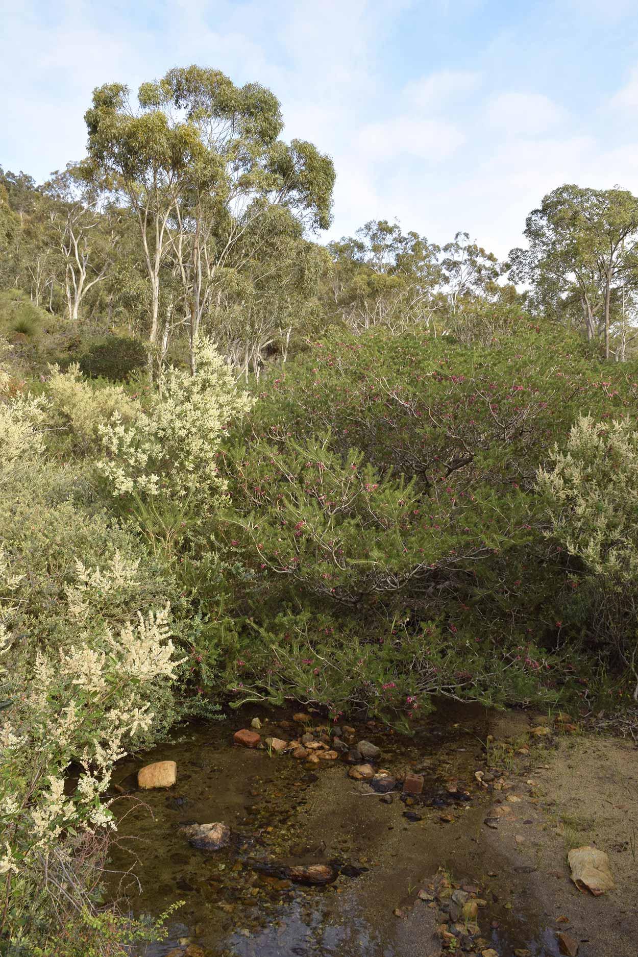 A babbling Ellis Brook on the Blue Wren Ramble Trail, Ellis Brook Valley Reserve, Perth, Western Australia