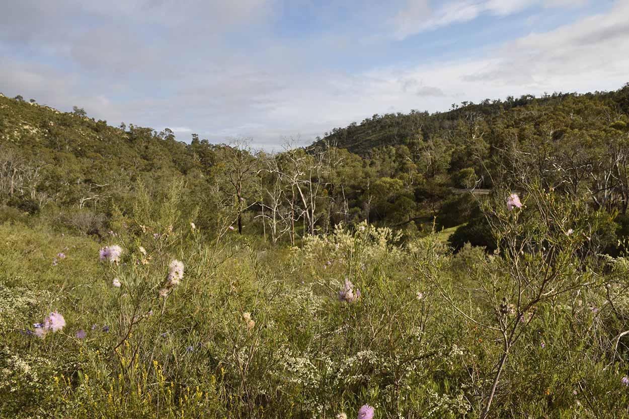 The Blue Wren Ramble Trail, Ellis Brook Valley Reserve, Perth, Western Australia