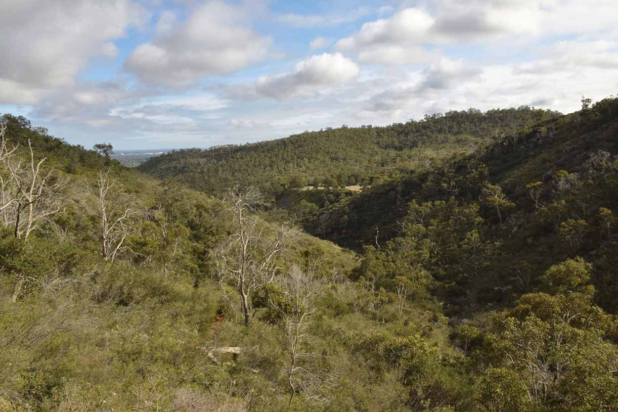 Bushland views, Ellis Brook Valley Reserve, Perth, Western Australia