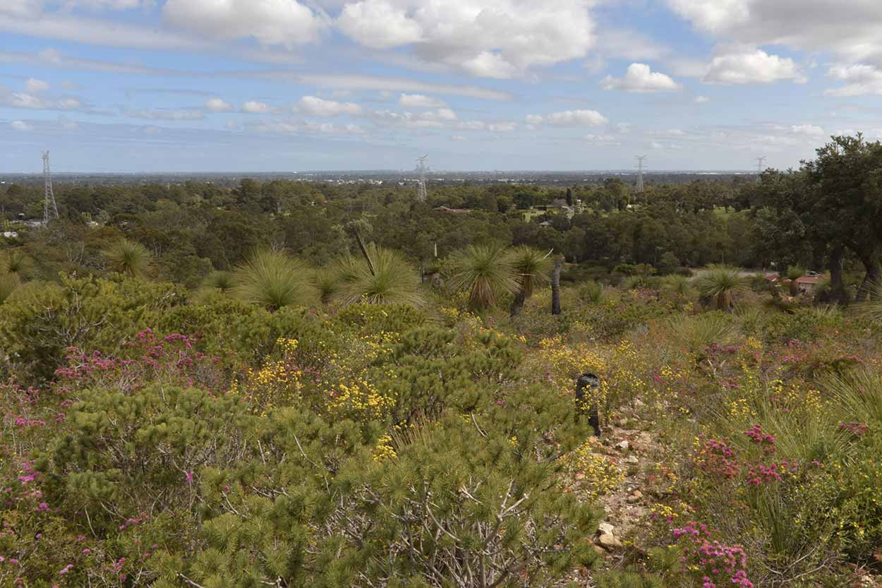 The view from the Eagle View Trail, Ellis Brook Valley Reserve, Perth, Western Australia