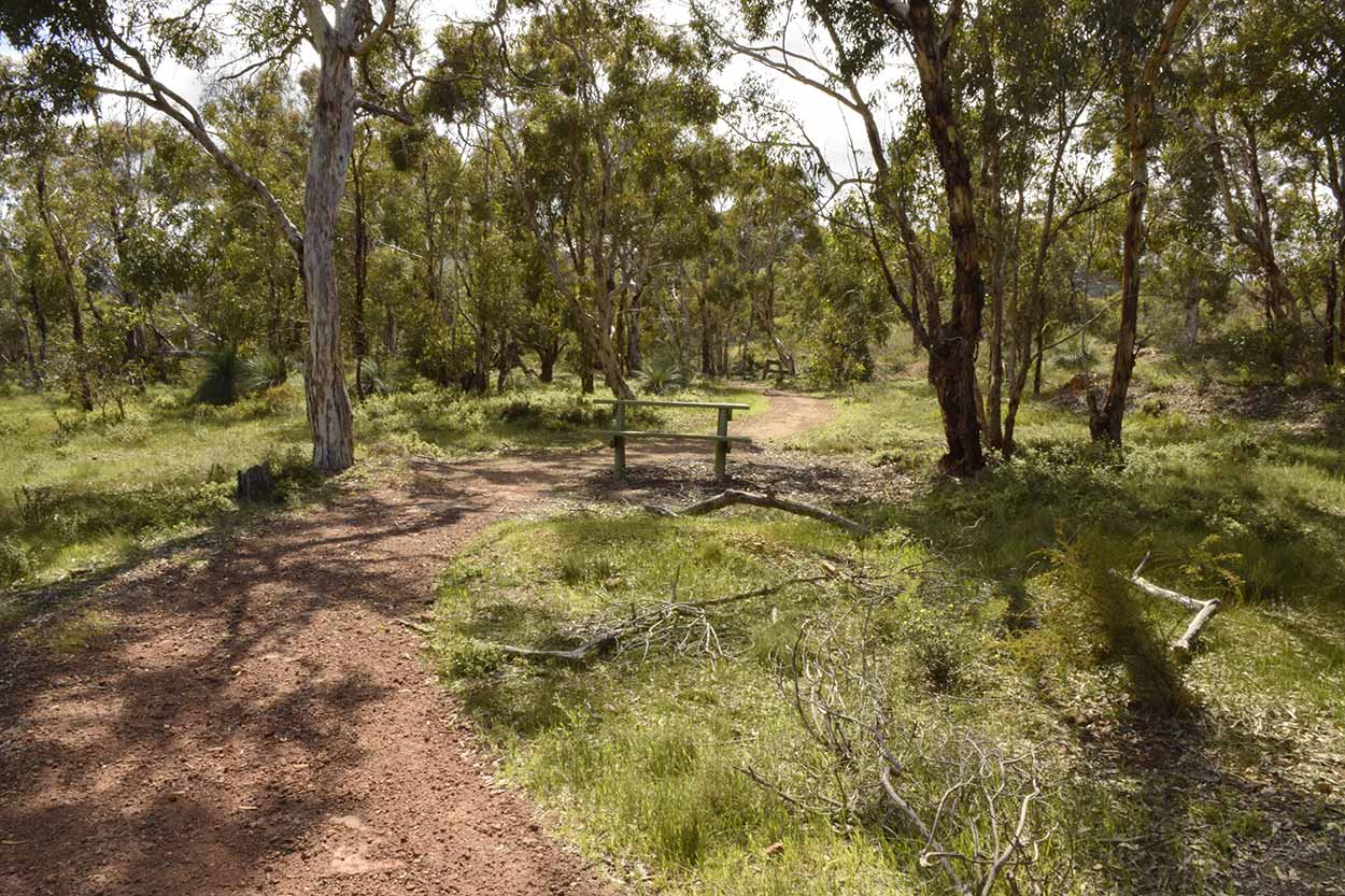 Strolling along the Easy Walk Trail, Ellis Brook Valley Reserve, Perth, Western Australia