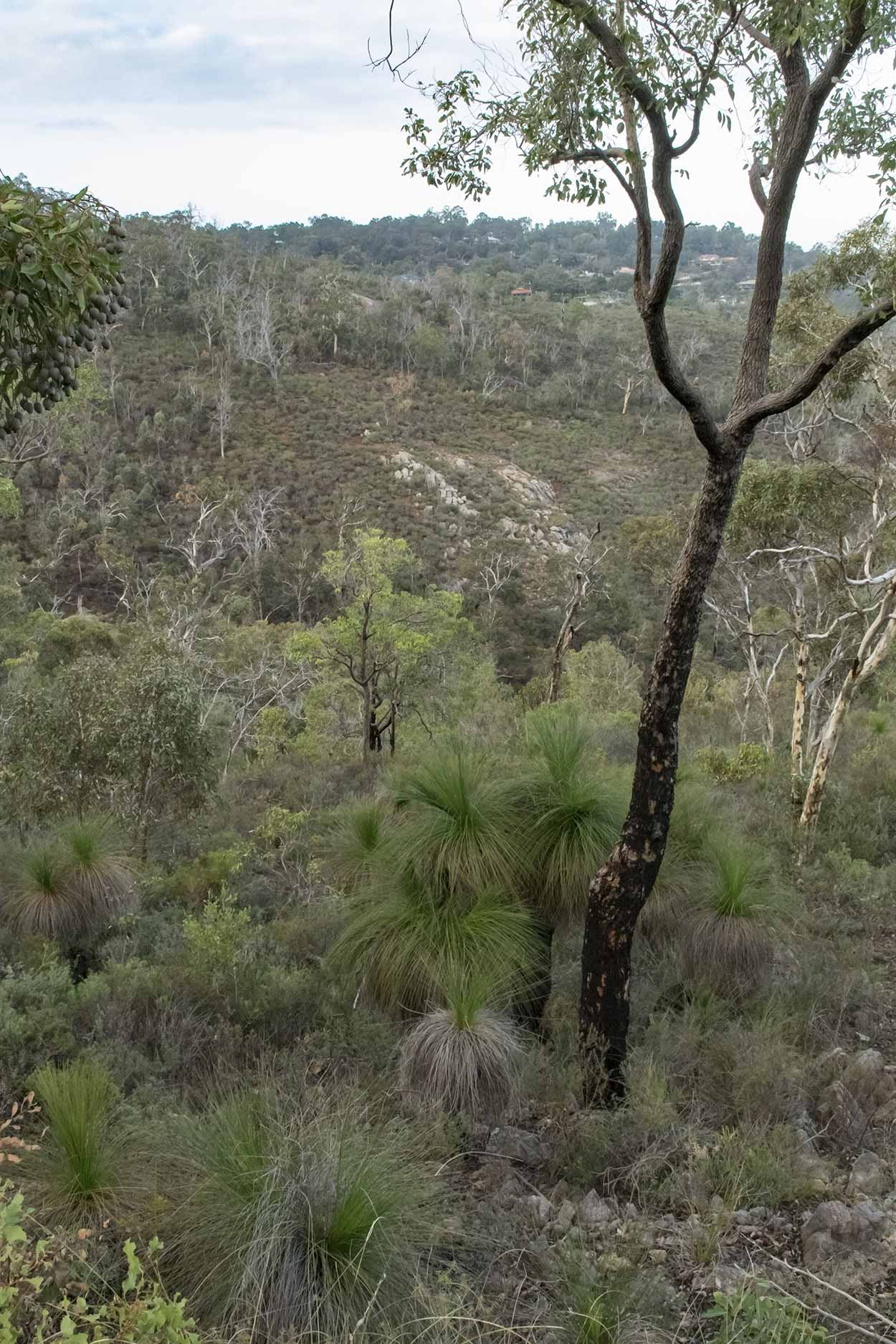 Bushland views, Gooseberry Hill, Perth, Western Australia