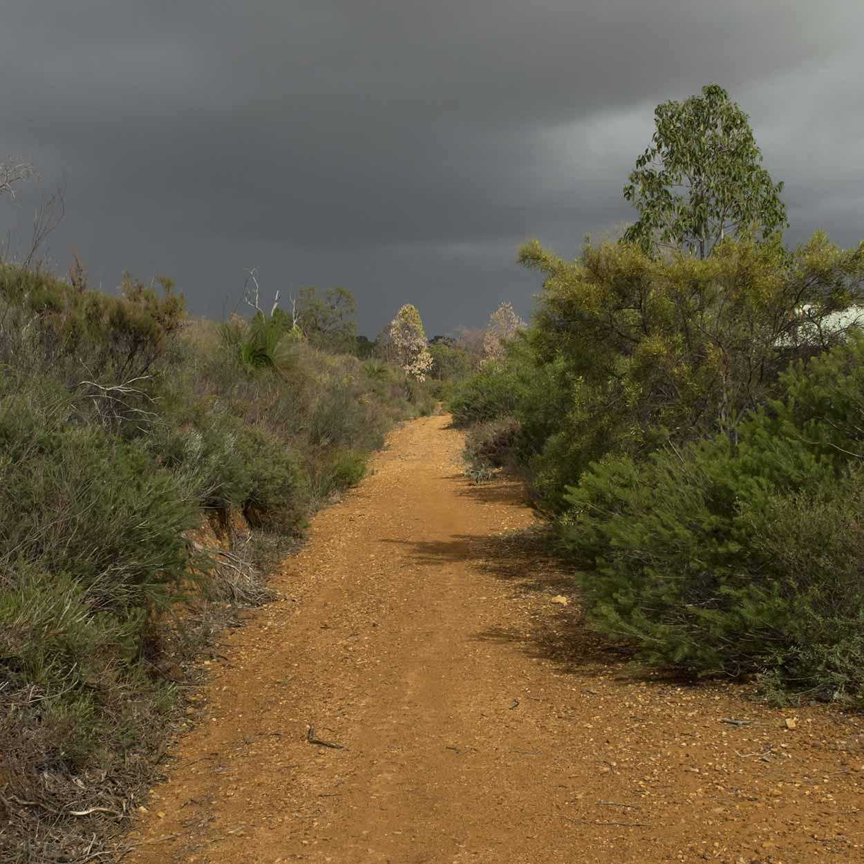 Walking in the bushland, Gooseberry Hill, Perth, Western Australia