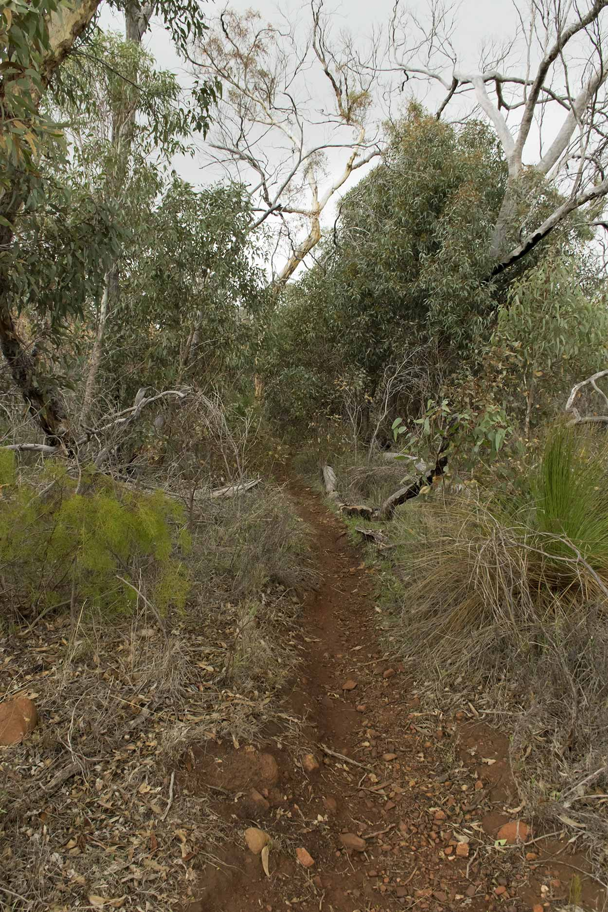 Walking in the scrub, Gooseberry Hill, Perth, Western Australia