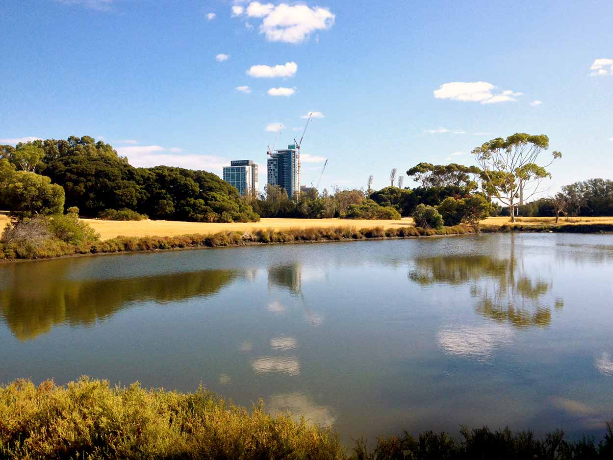 The skyscrapers of Perth's skyline peep over the trees to see a lake within Heirisson Island, Perth, Western Australia