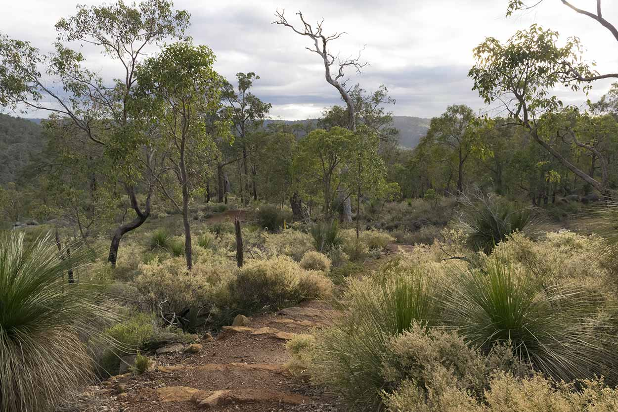 A morning stroll on the Bibbulmun Track, Kalamunda National Park, Perth, Western Australia
