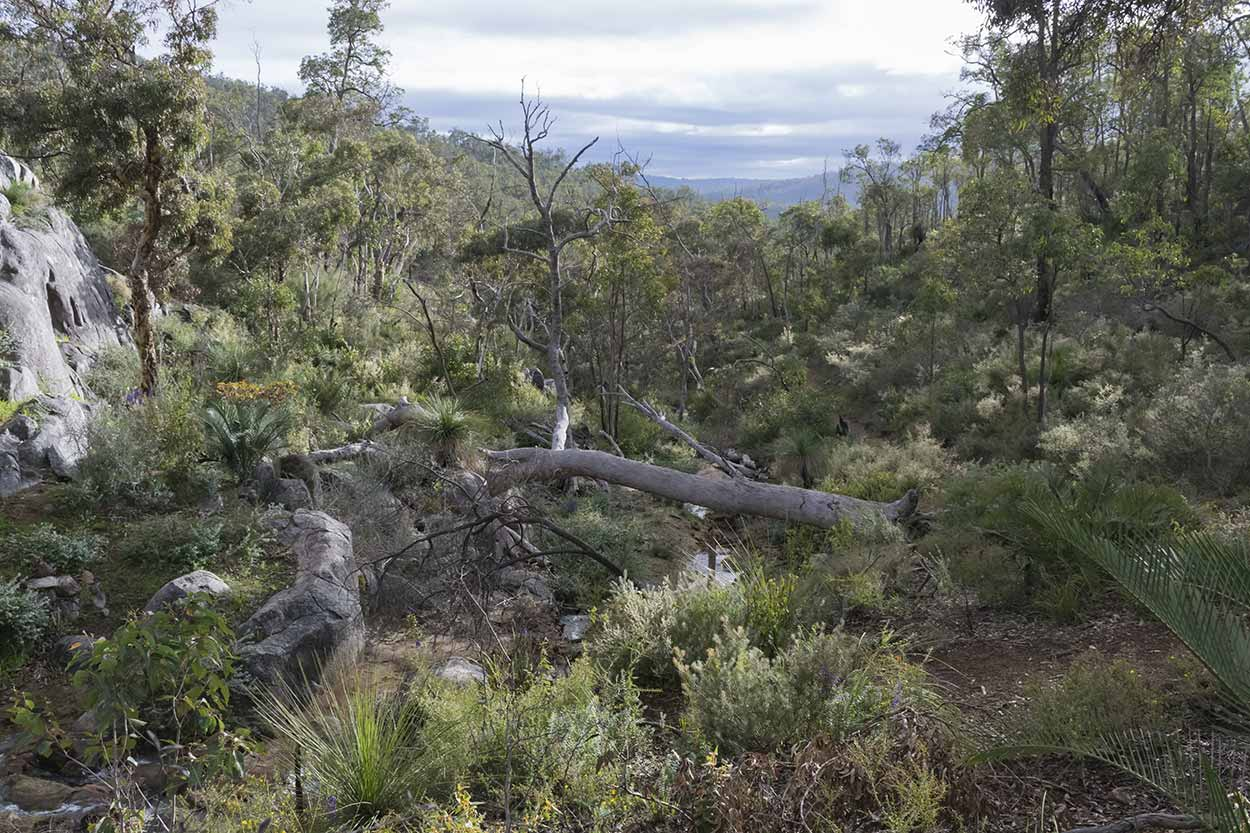 A perfect bushland setting along the Bibbulmun Track, Kalamunda National Park, Perth, Western Australia