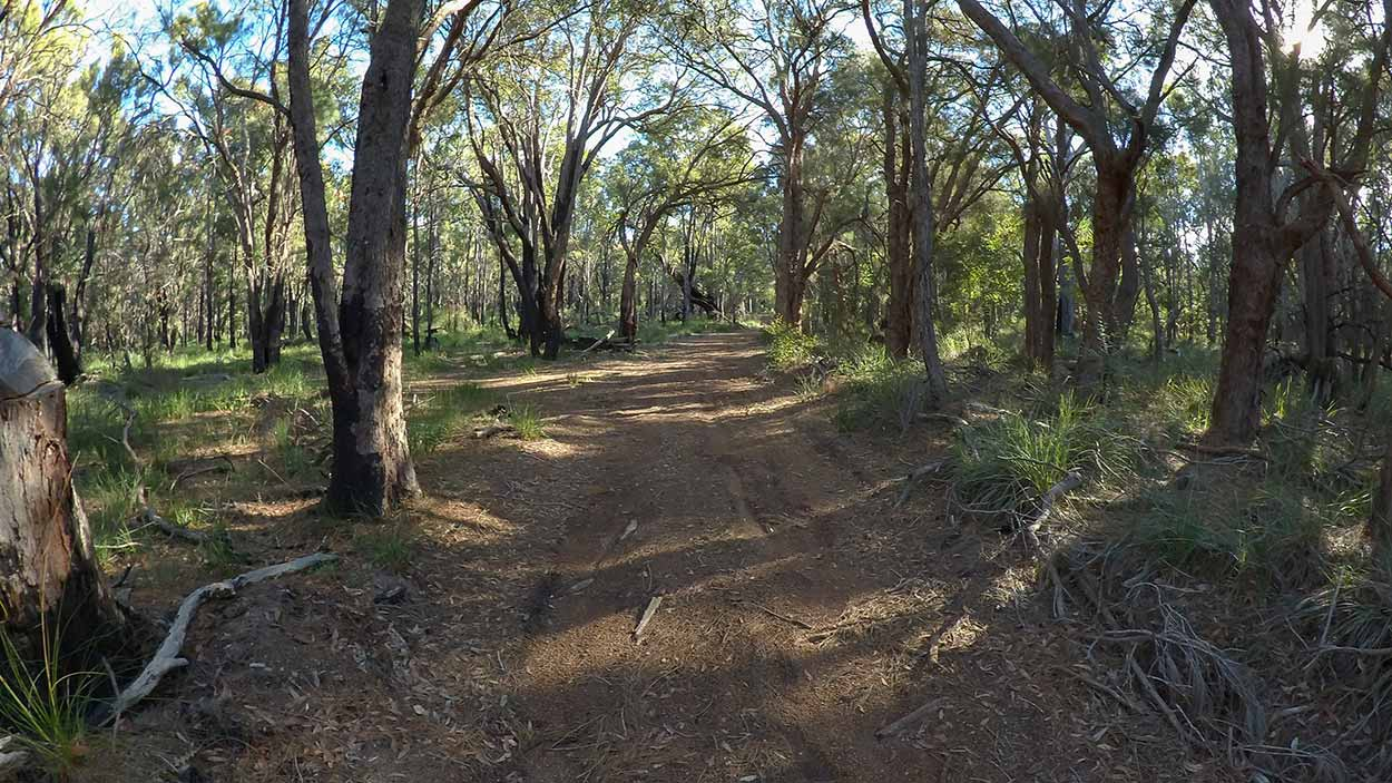 Bush track near Canning Road, Perth, Western Australia