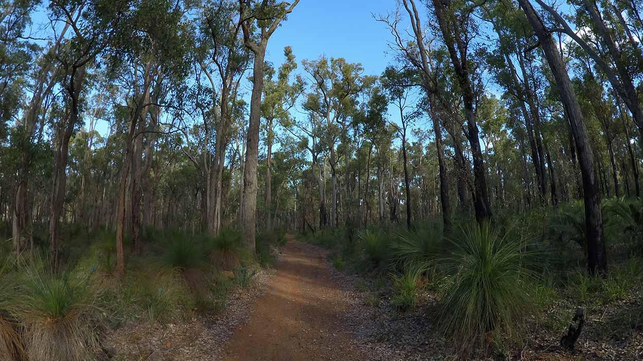 Kattamordo Heritage Trail near Victoria Reservior, Perth, Western Australia