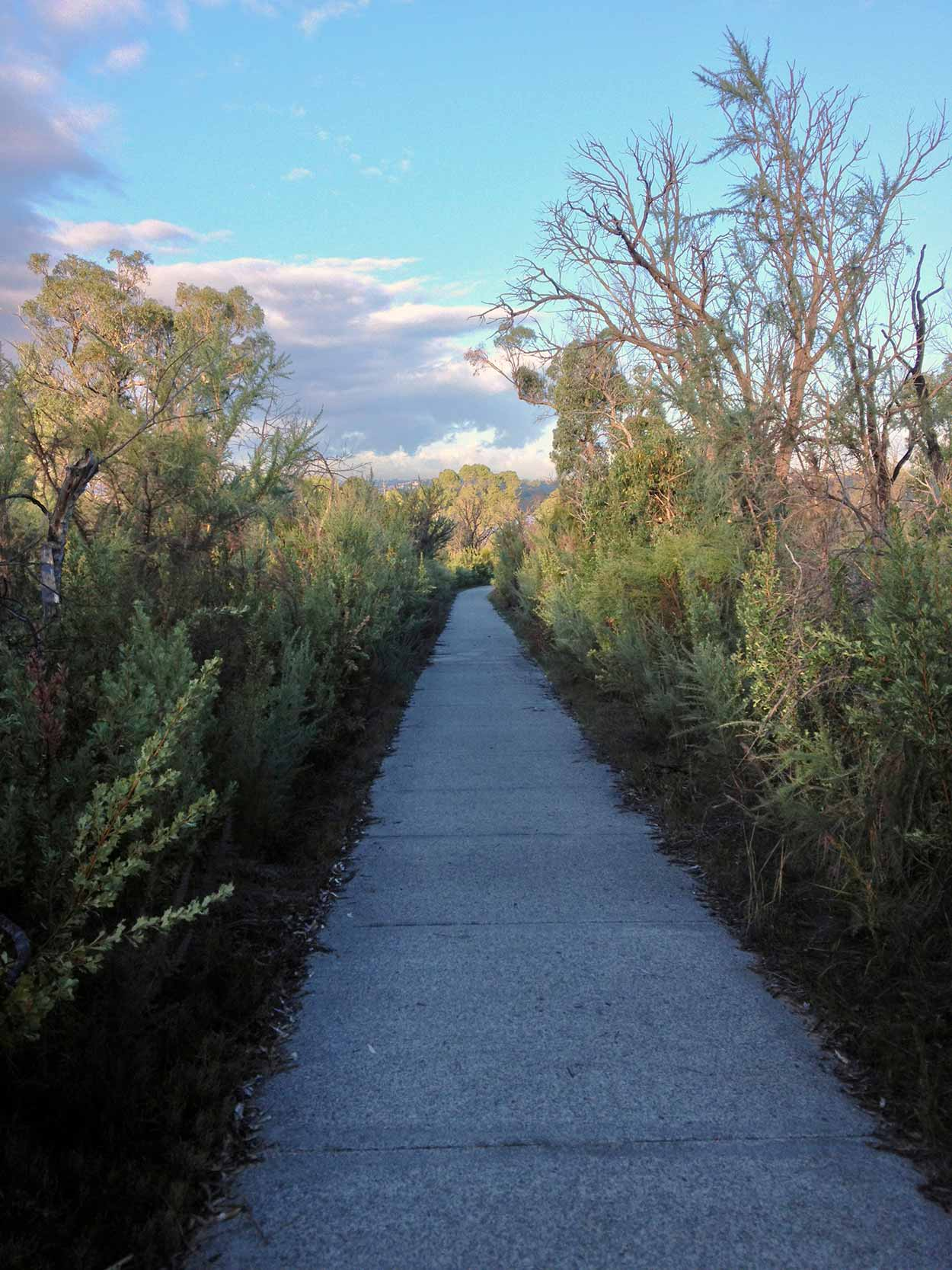 A path in the Kings Park bushland near Forrest Drive, Perth, Western Australia