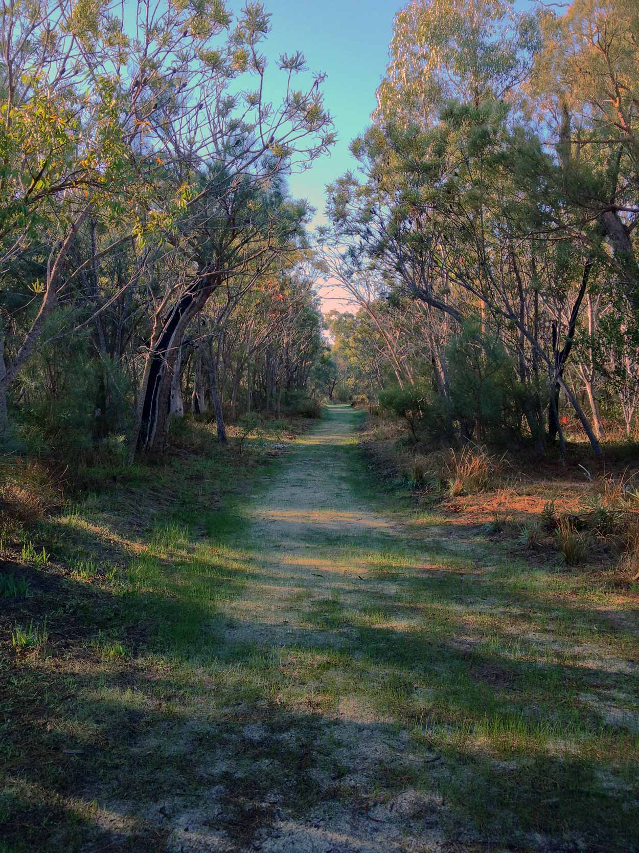 A sandy path in the Kings Park bushland near Thomas Street, Perth, Western Australia