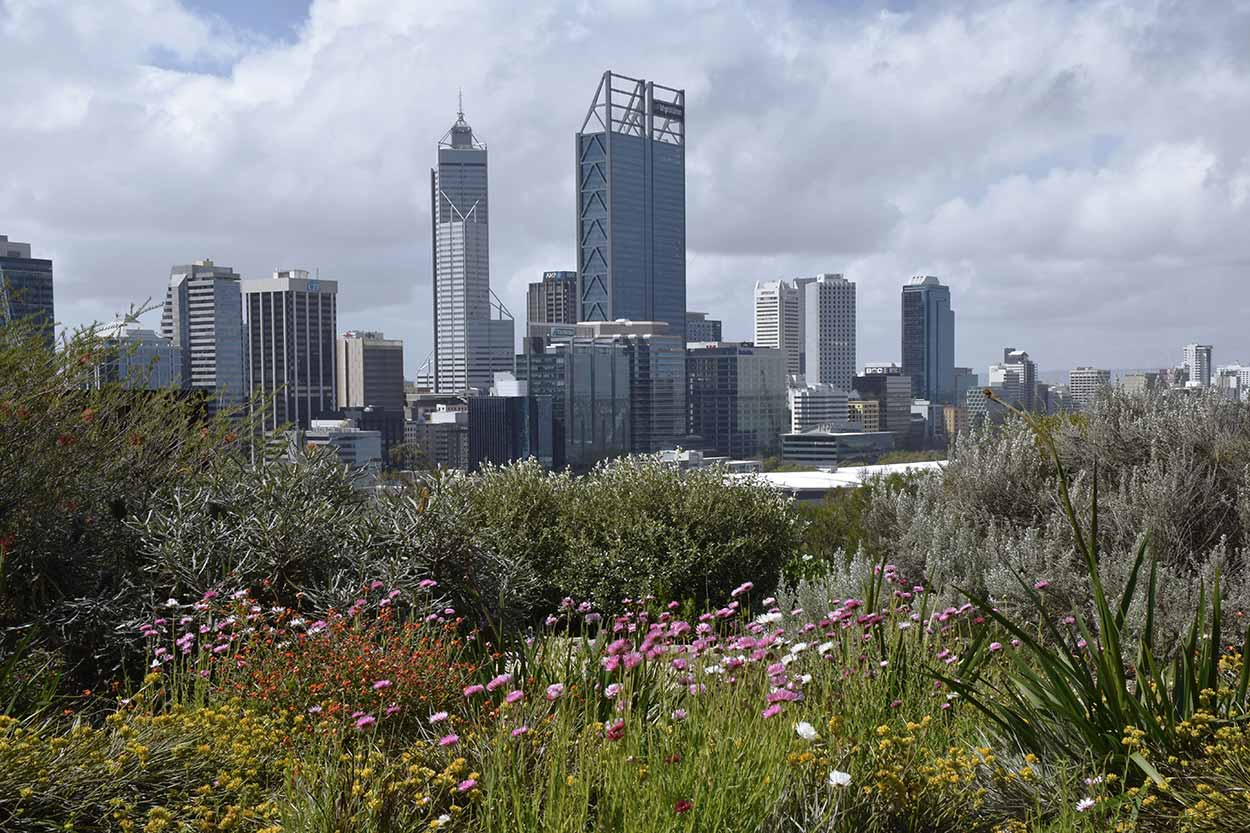 A view of the Perth CBD amongst the flowers, Kings Park, Perth, Western Australia