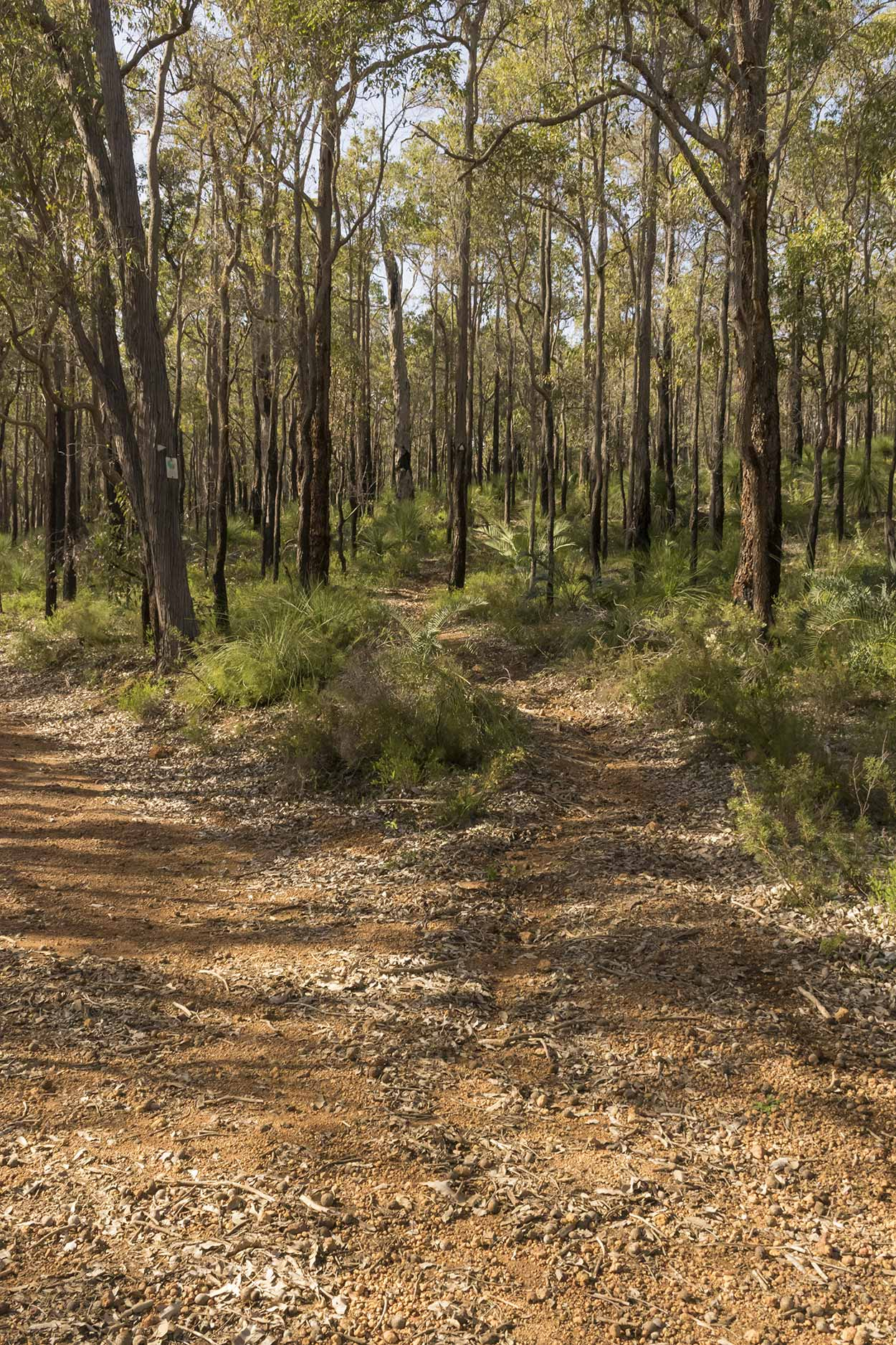 A diversion into the bush on the Victoria Reservoir Walk, Korung National Park, Perth, Western Australia