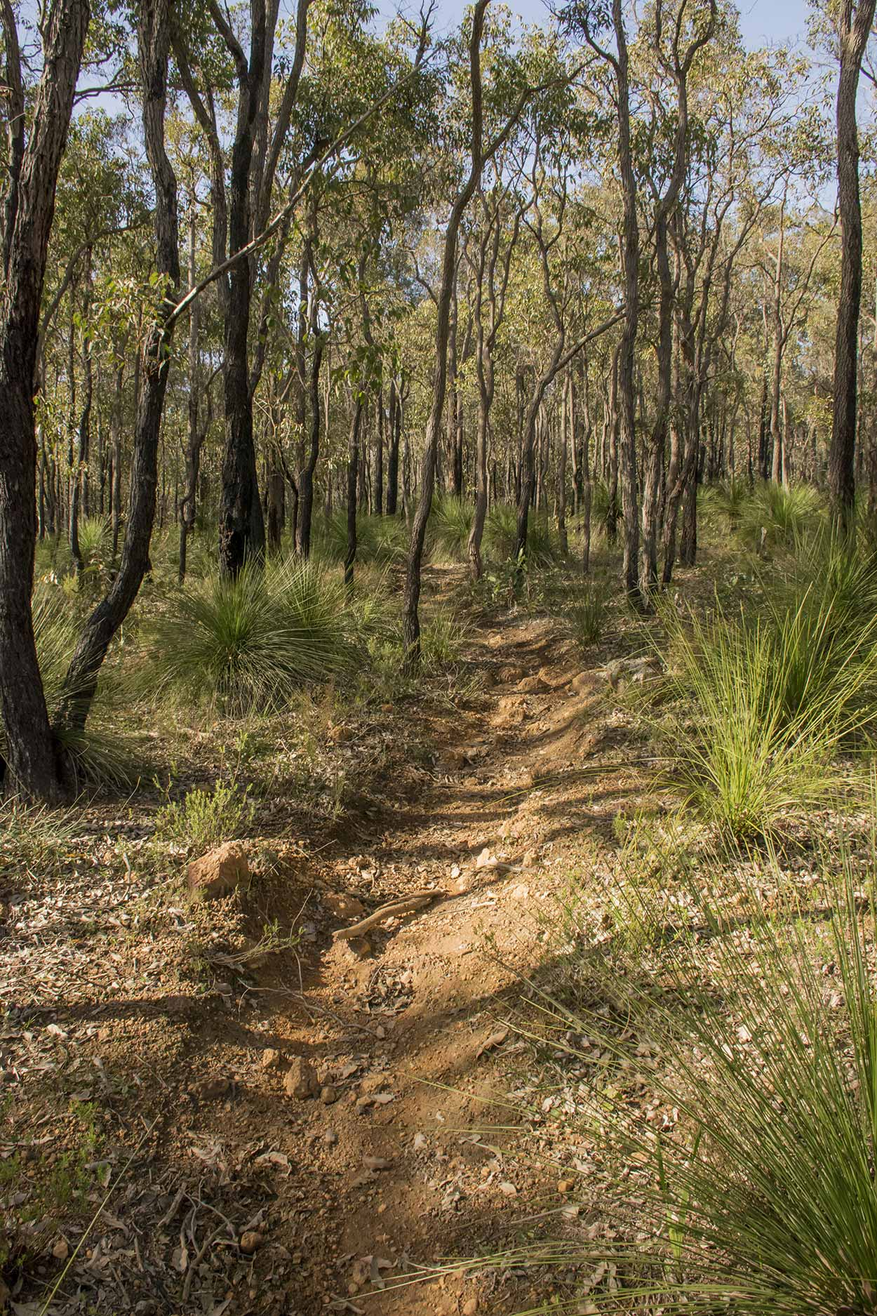 A bush track on the northeast corner of the Victoria Reservoir Walk, Korung National Park, Perth, Western Australia