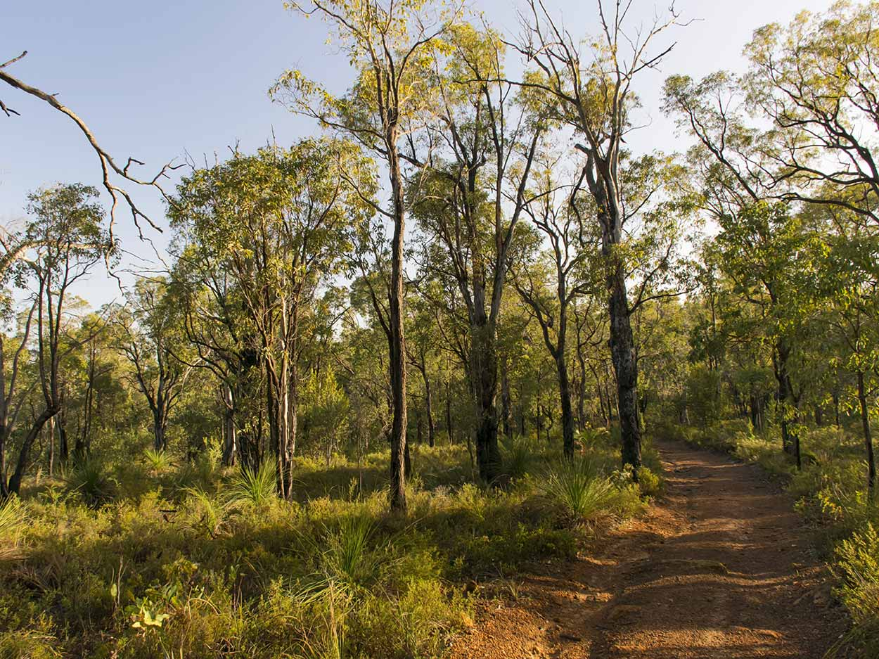 Bushland, Lion's Lookout, Perth, Western Australia