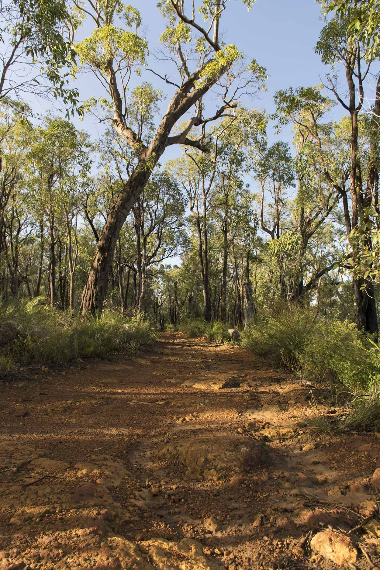 A path in the bushland, Lion's Lookout, Perth, Western Australia
