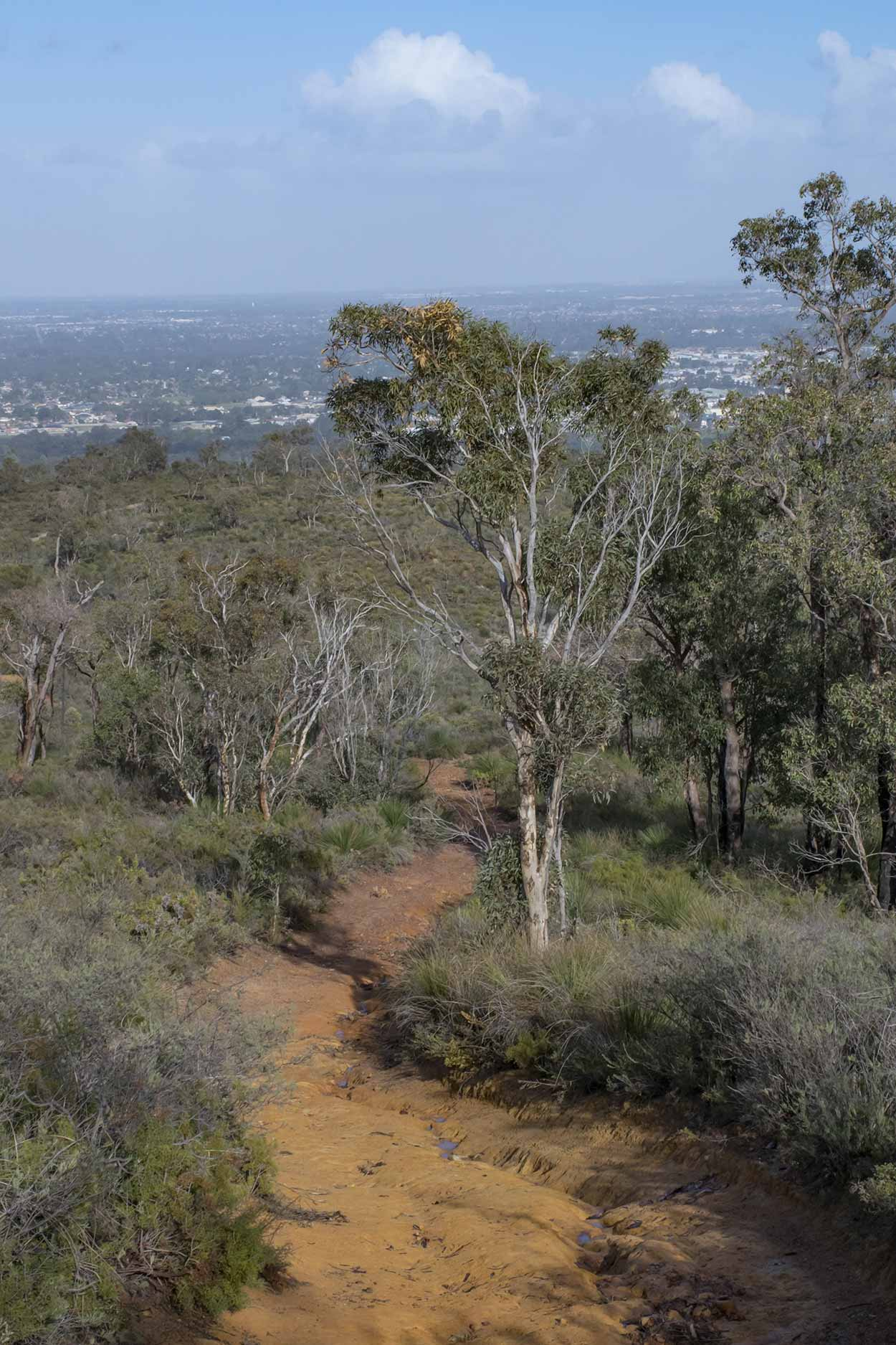 Bushland with a view over the Swan Coastal Plain, Lion's Lookout, Perth, Western Australia