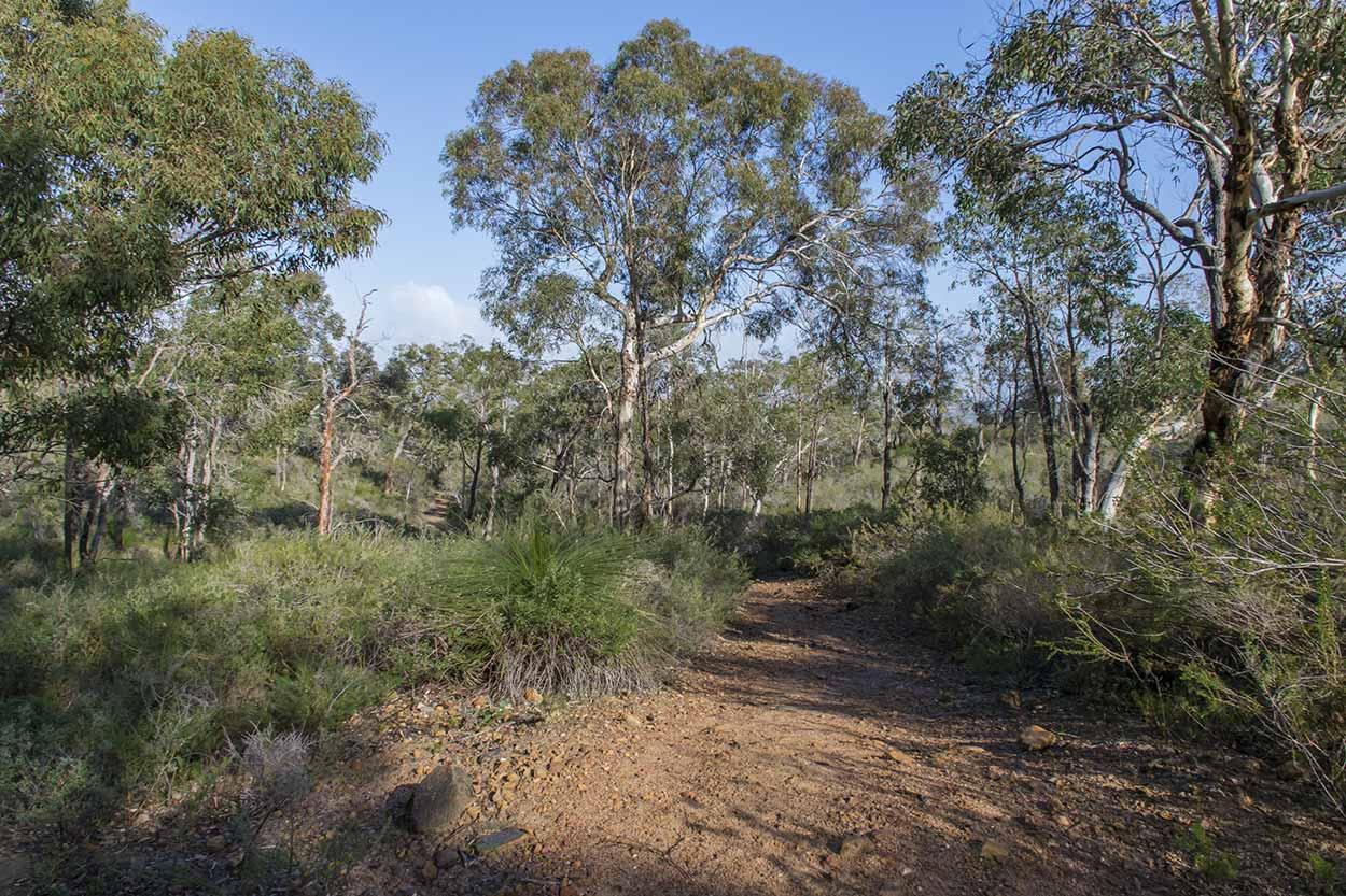 Enjoying a bush land walk, Lion's Lookout, Perth, Western Australia