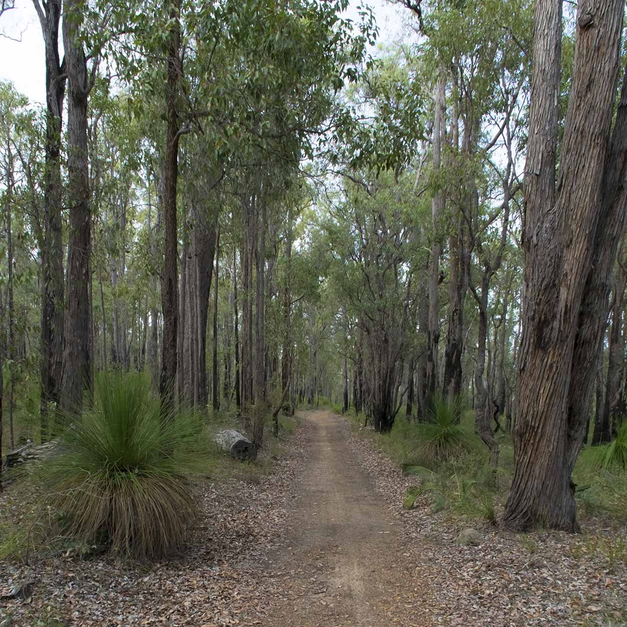 Hiking along the Munda Biddi Trail, Mundaring, Perth, Western Australia