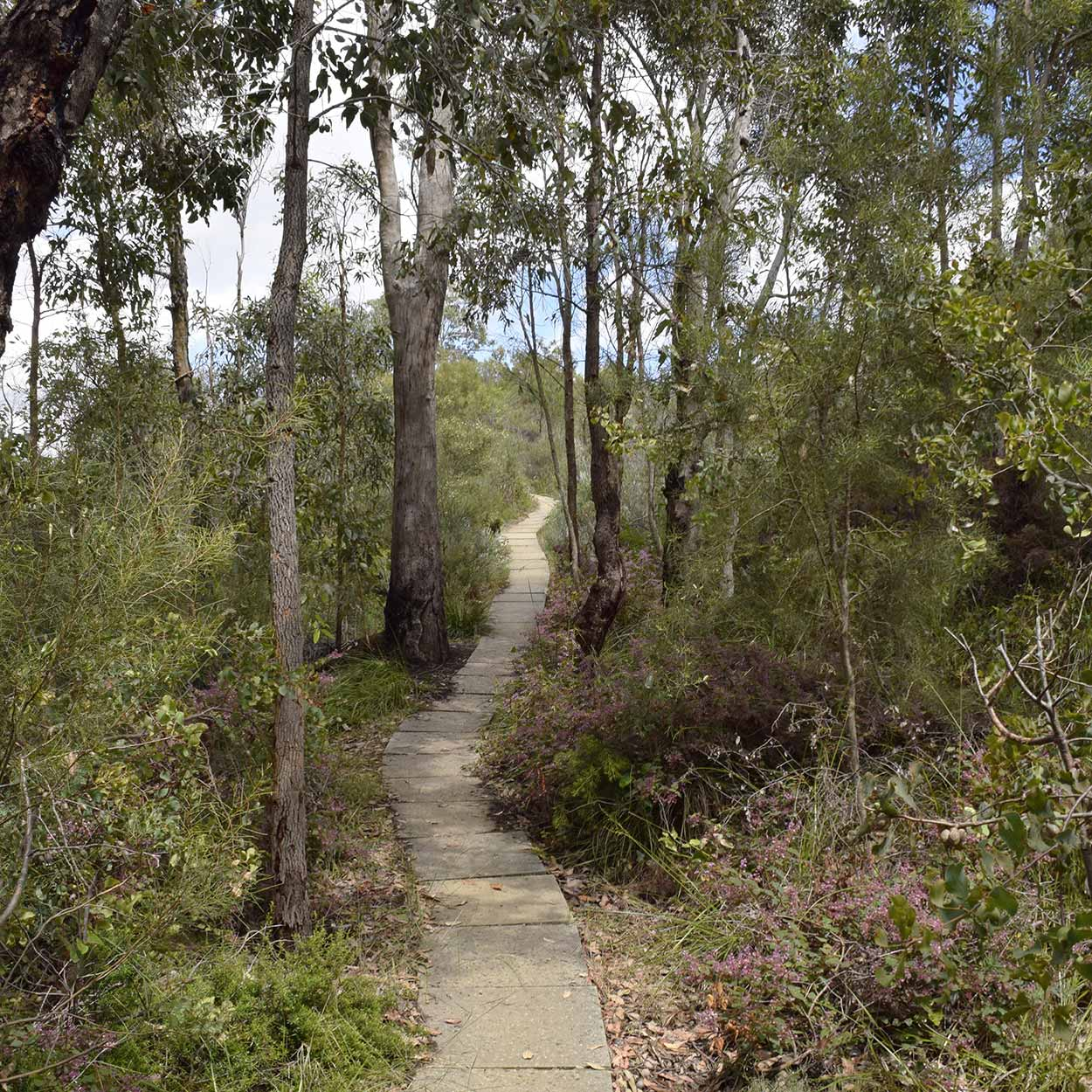 Walking along the Shoulder Trail, Mundy Regional Park, Perth, Western Australia