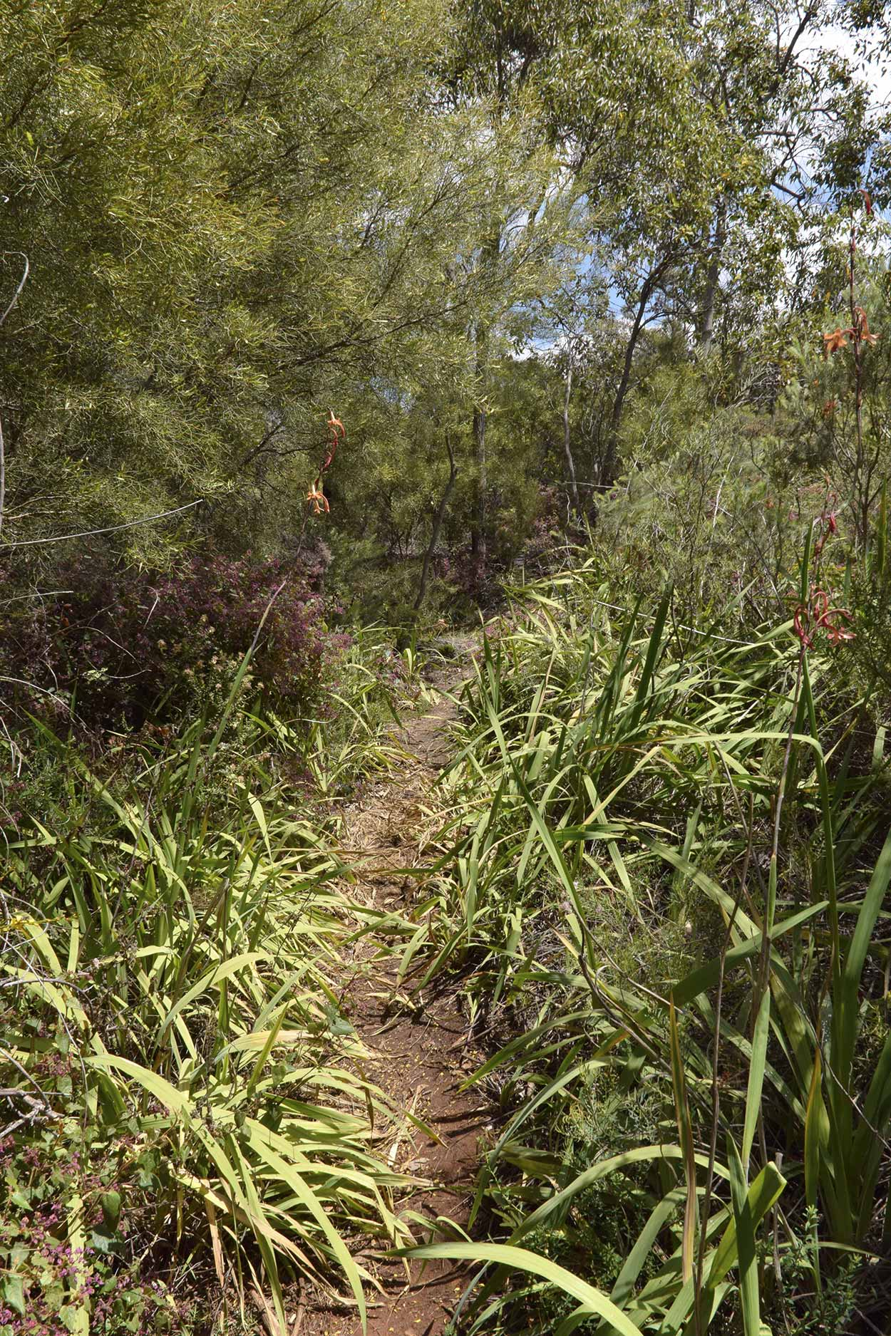 Trail on the north bank of Lesmurdie Brook, Mundy Regional Park, Perth, Western Australia