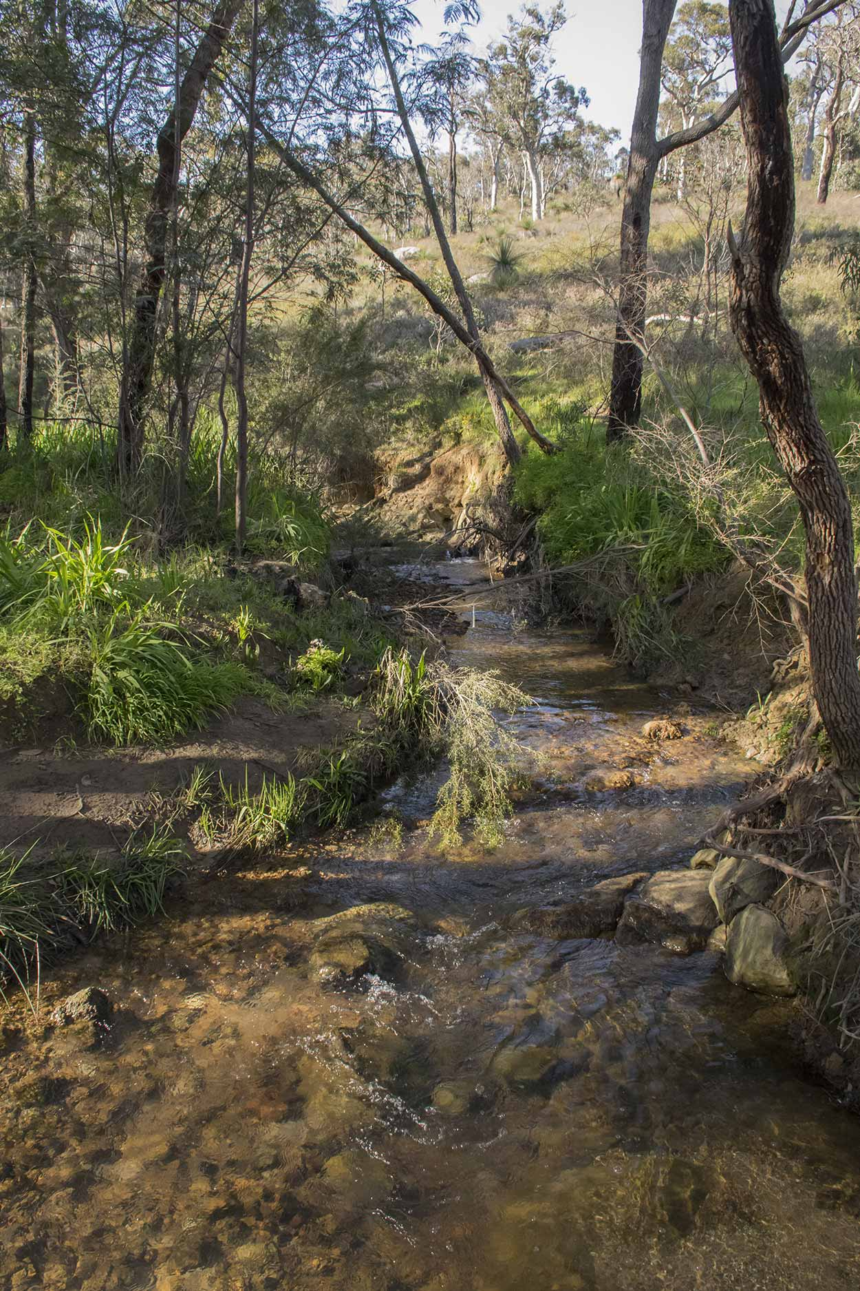 Babbling creek in Whistlepipe Gully, Mundy Regional Park, Perth, Western Australia