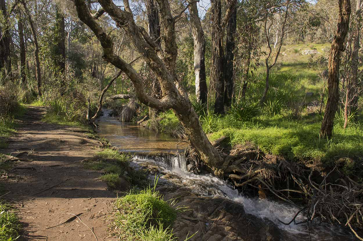 A creek side Whistlepipe Gully Walk, Mundy Regional Park, Perth, Western Australia