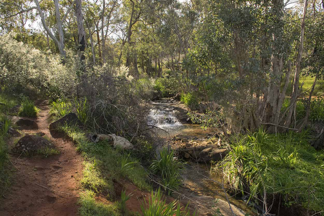 Morning sunlight shines on the Whistlepipe Gully Walk, Mundy Regional Park, Perth, Western Australia