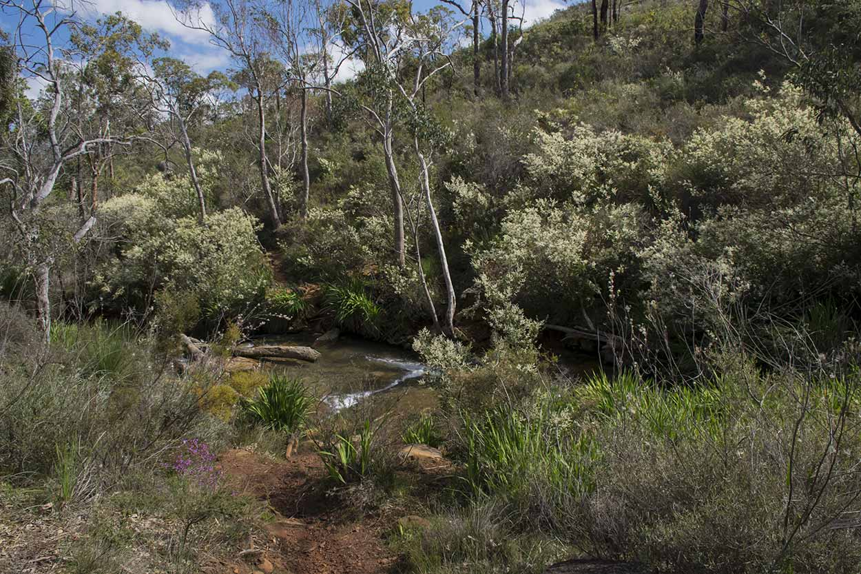 Springtime on the Whistlepipe Gully Walk, Mundy Regional Park, Perth, Western Australia