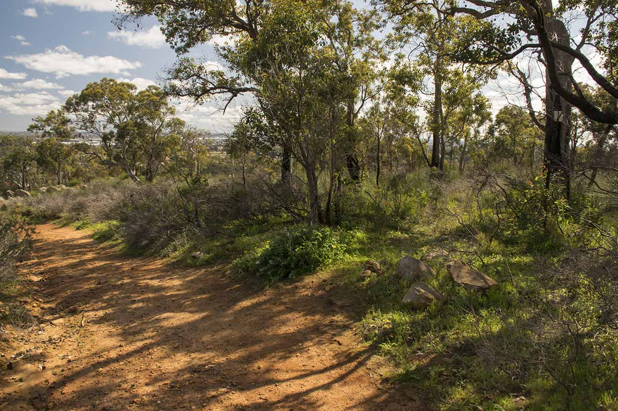Off the beaten path and into the bushland on the western side of the Lewis Road Walk, Mundy Regional Park, Perth, Western Australia