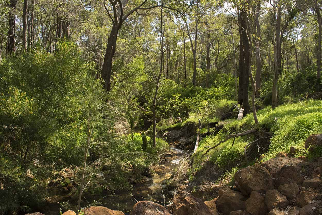 Lush bushland on the Whistlepipe Gully Walk, Mundy Regional Park, Perth, Western Australia