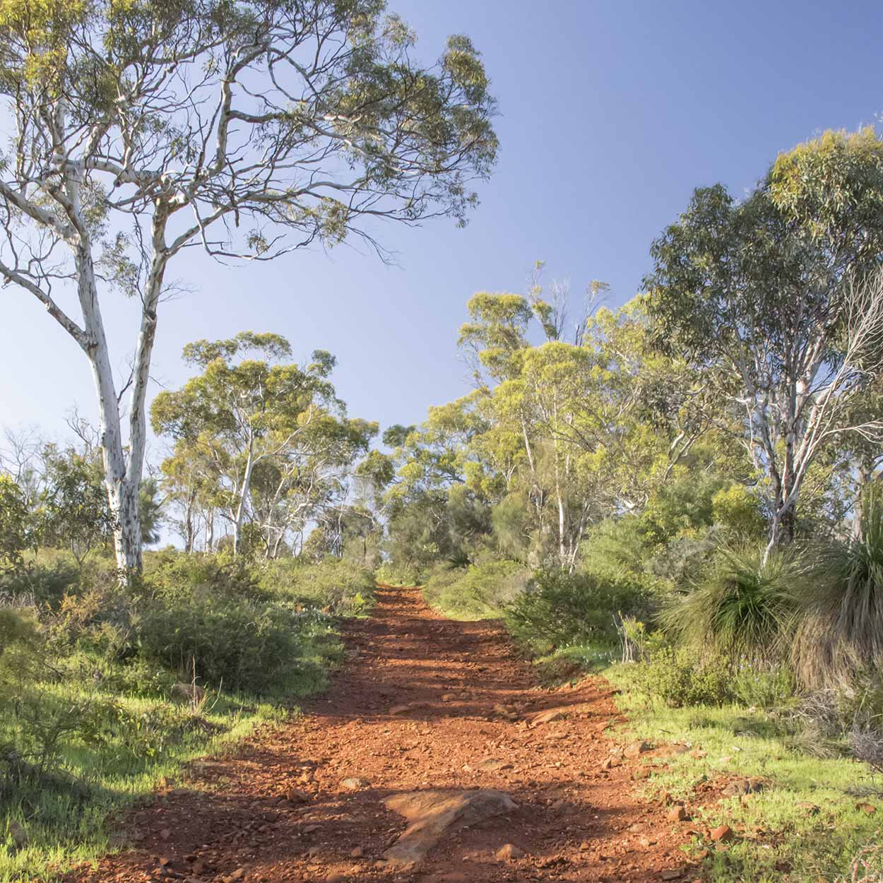 Morning sunshine on the Palm Terrace Walk, Mundy Regional Park, Perth, Western Australia