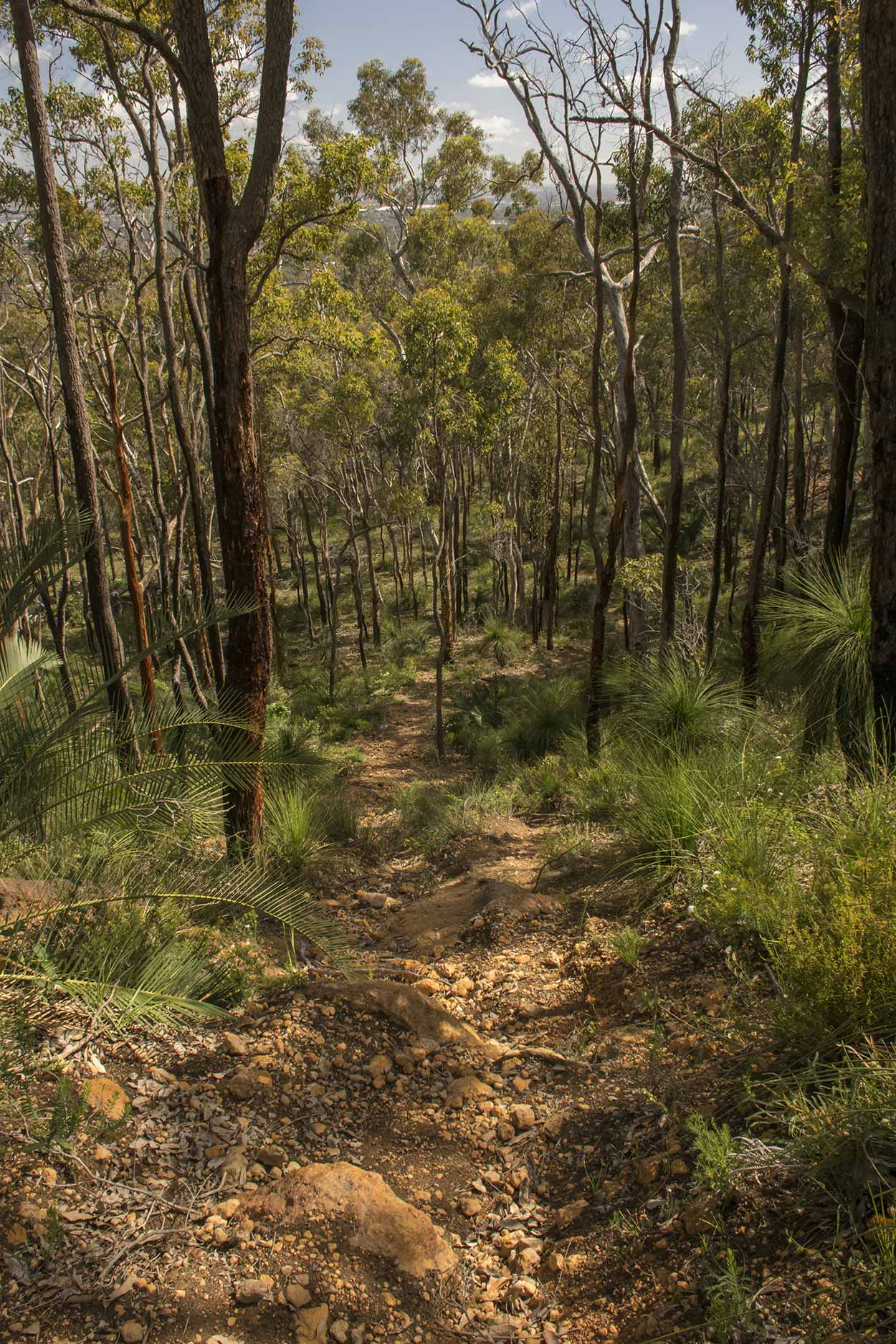 A rocky track descends into the bushland of the Palm Terrace Walk, Mundy Regional Park, Perth, Western Australia