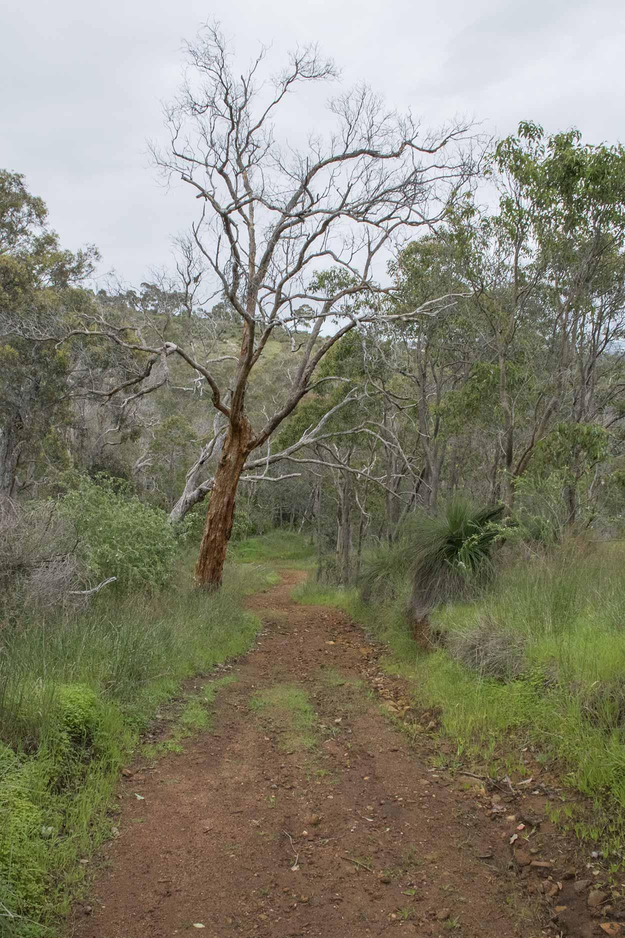 Hiking along the West Terrace Walk, Mundy Regional Park, Perth, Western Australia