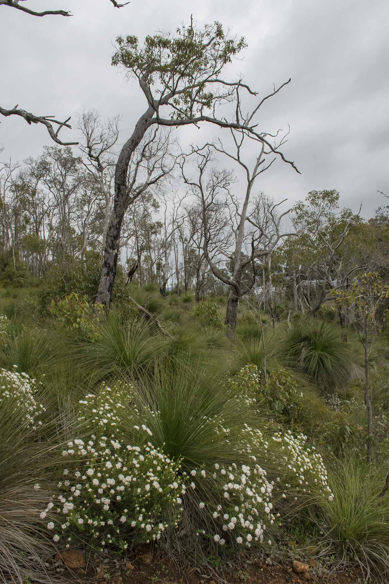 Flowers blooming on the West Terrace Walk, Mundy Regional Park, Perth, Western Australia