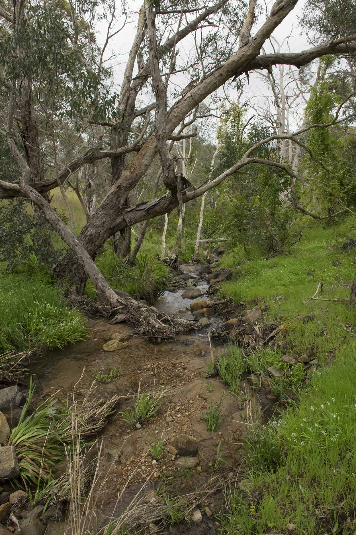 A babbling creek on the West Terrace Walk, Mundy Regional Park, Perth, Western Australia