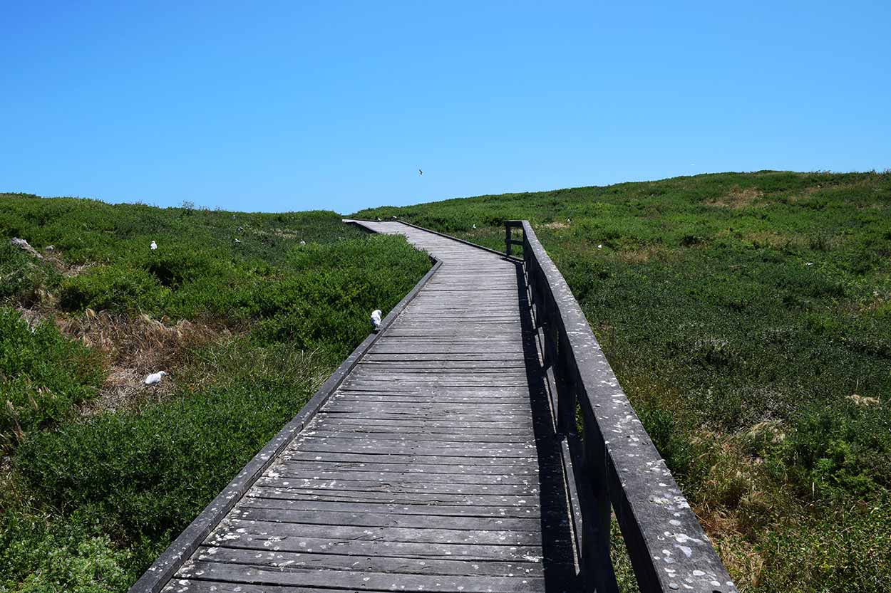 Boardwalk, Penguin Island, Perth, Western Australia