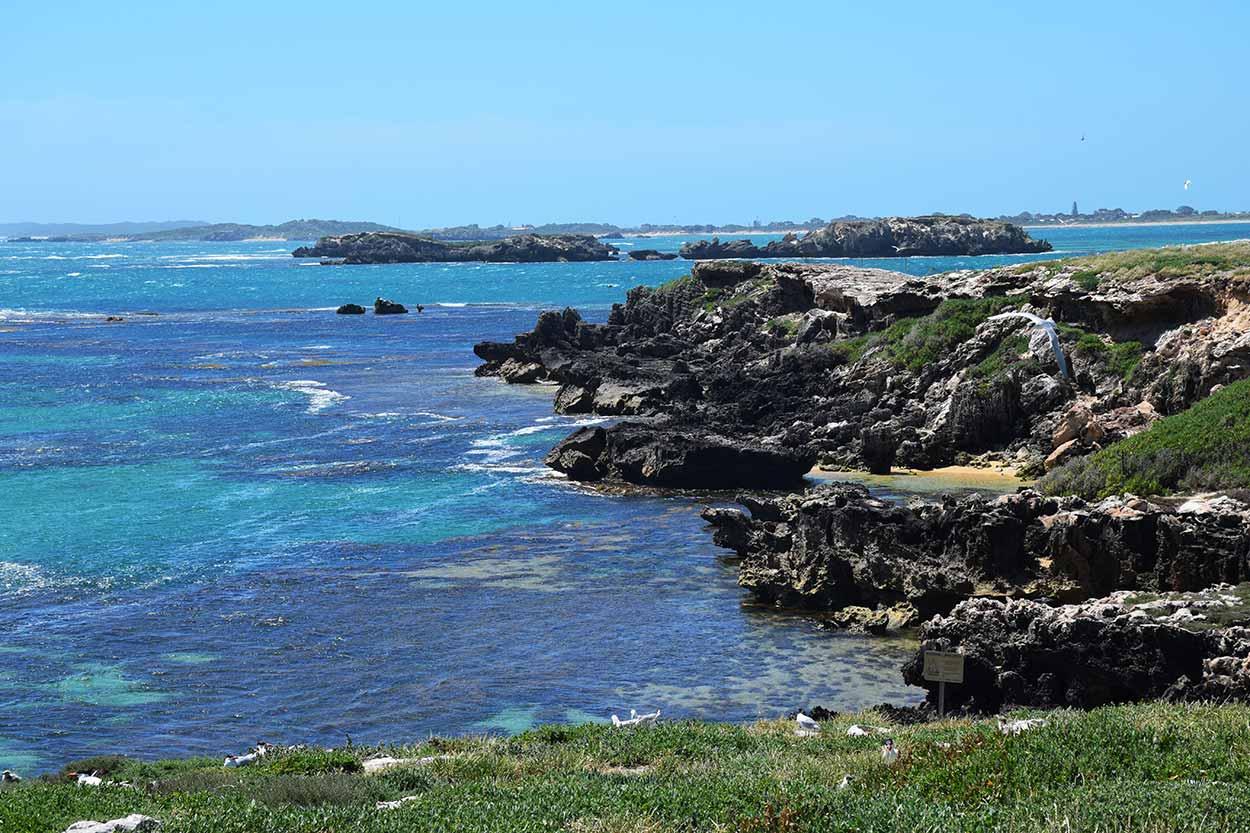 The rocky Indian Ocean shoreline of Penguin Island, Penguin Island, Rockingham, Perth, Western Australia