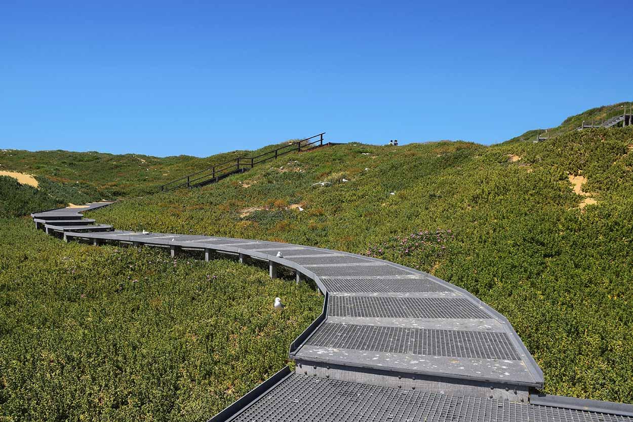 Raised walkway above the dune foliage, Penguin Island, Perth, Western Australia