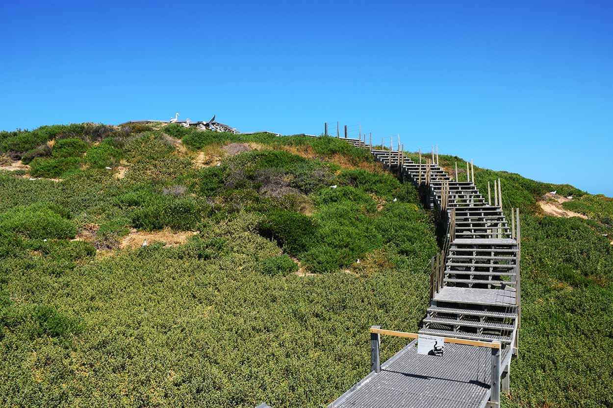 Boardwalk to the southern lookout, Penguin Island, Perth, Western Australia