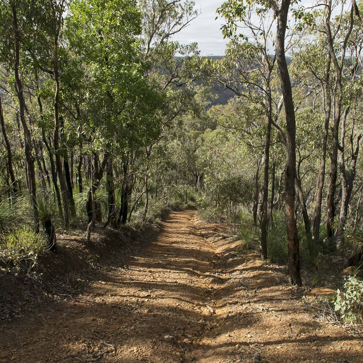 Bush trail of the Rocky Pool Walk, Kalamunda National Park, Perth, Western Australia